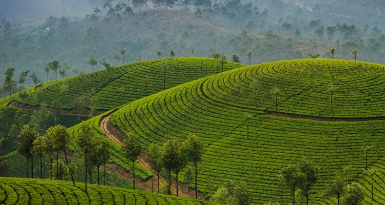Darjeeling with Kalimpong Excursion